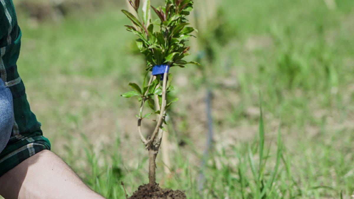 Adottati in Sicilia 200 alberi da frutto grazie a Euro Company 1