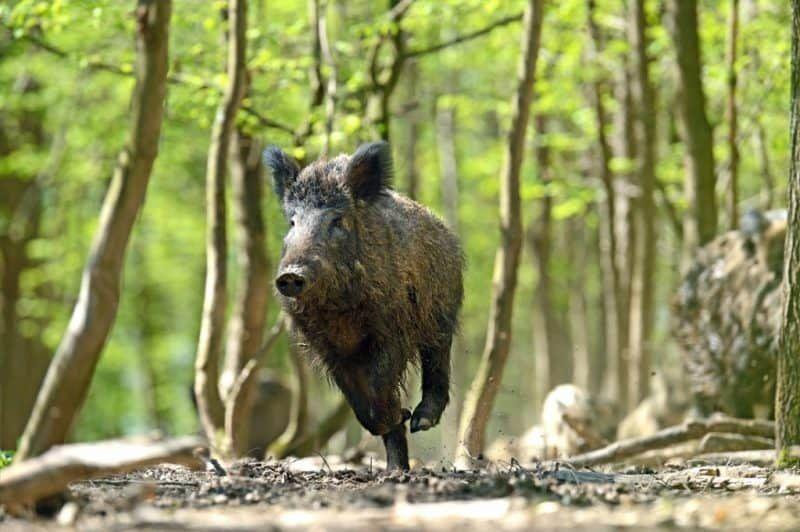 Fauna selvatica e agricoltura, come convivere?