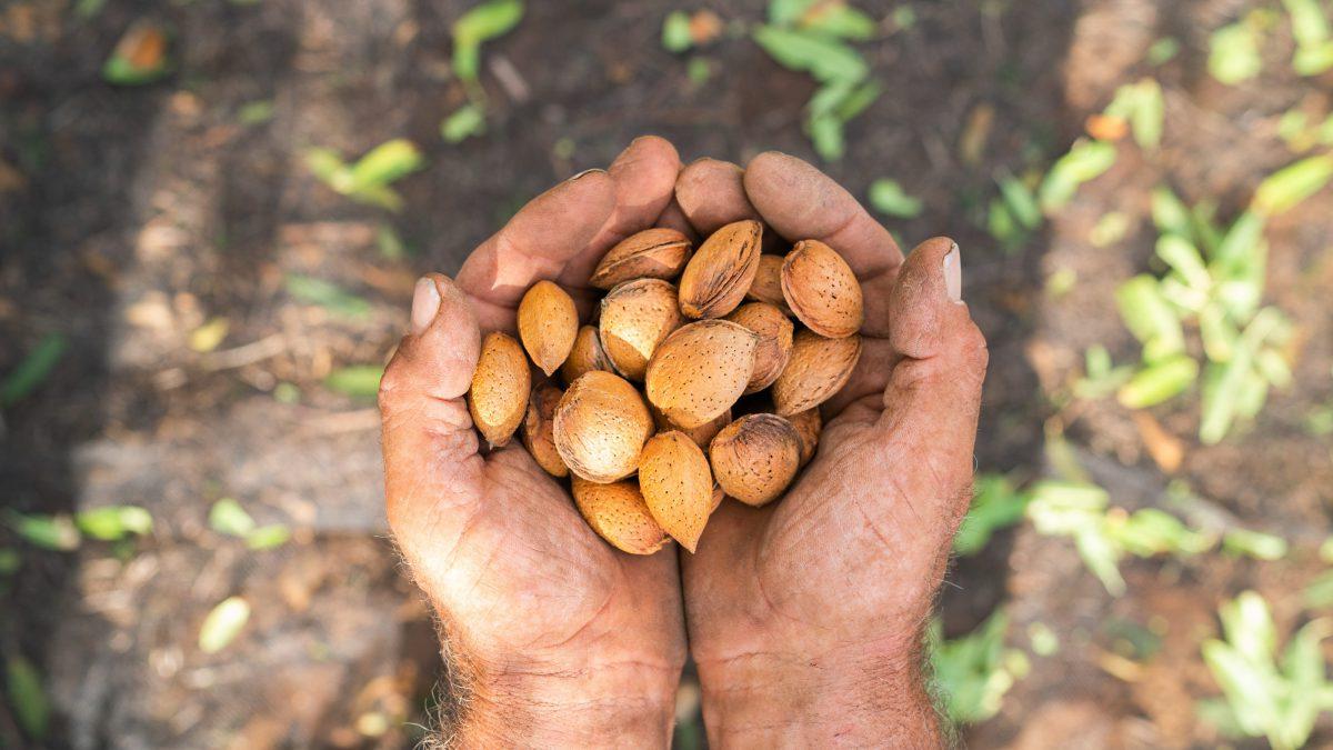 Filiere sostenibili locali per mandorle, nocciole e noci